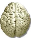 Diseño: Braindot.com.ar